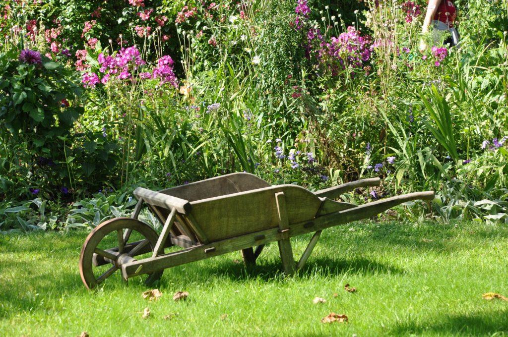 Une brouette au milieu d'un jardin d'herbes et de fleurs